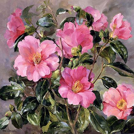 Camellias - Birthday Card by Anne Cotterill
