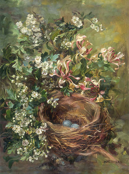 Hawthorn and Honeysuckle greetings card by Anne Cotterill